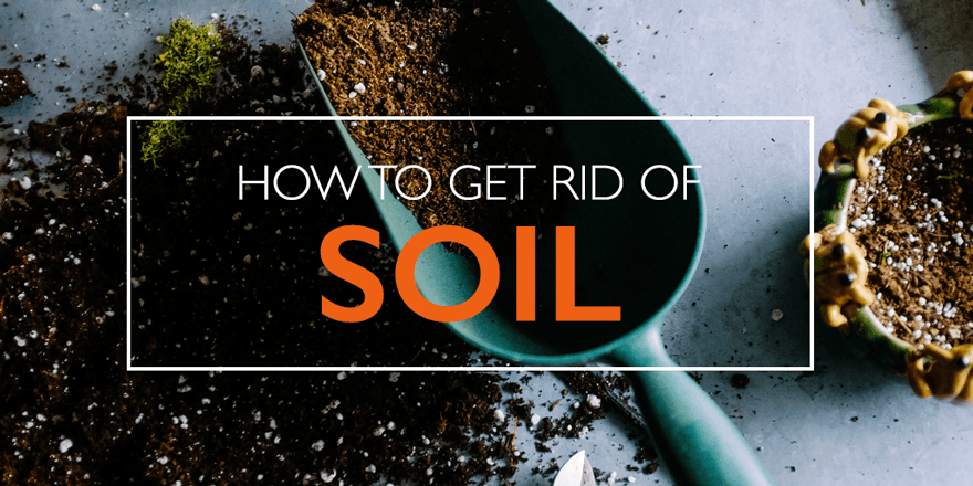 how to get rid of whiteflies in soil