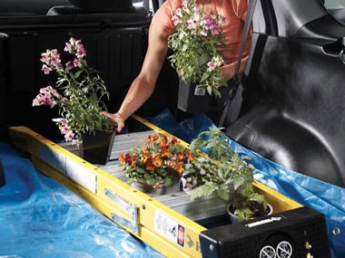 Transporting Plants