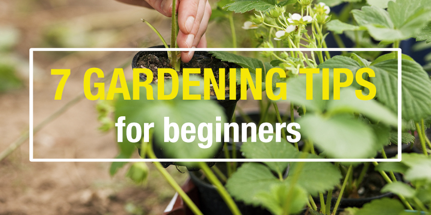 ... 12/07/2016 7 Tips For Beginner Gardeners ...